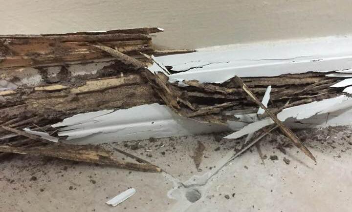 Baseboard Termite Damage