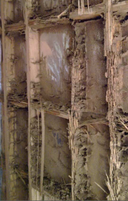 Termite Damage in a Wall